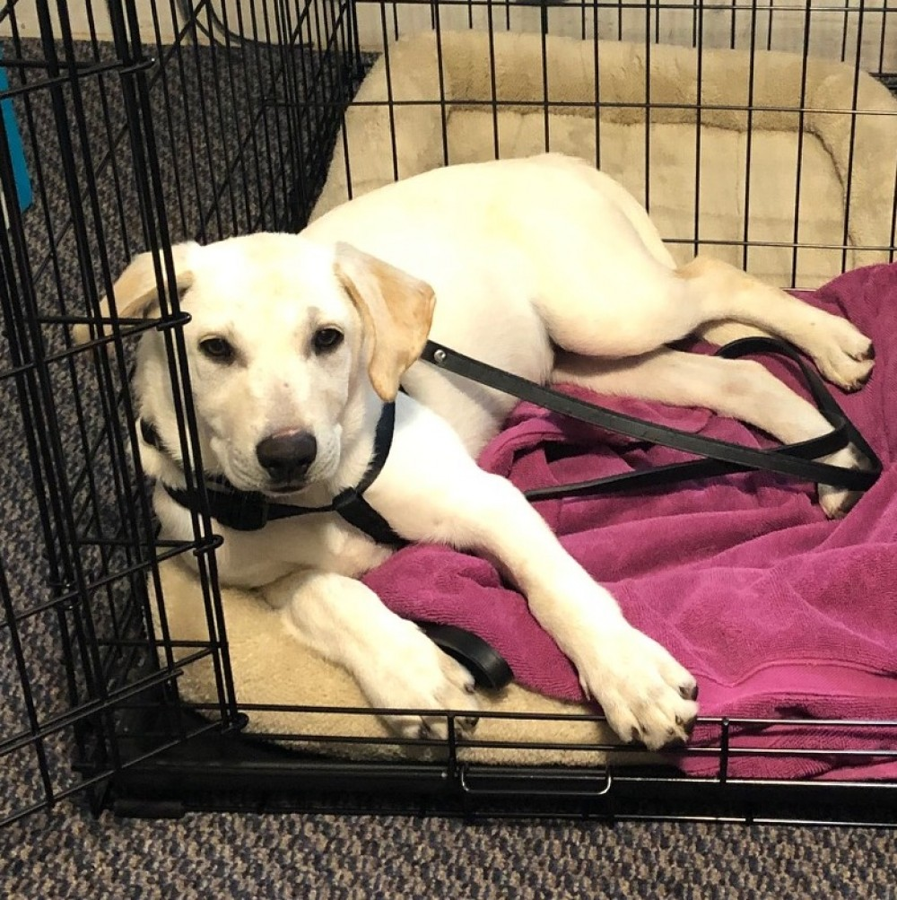 786a4e7c87 Bonita--who goes by Bo for short--is living the good life in Metuchen NJ.  Here she is chilling in her special spot. Her new dad says that she is  mostly a ...