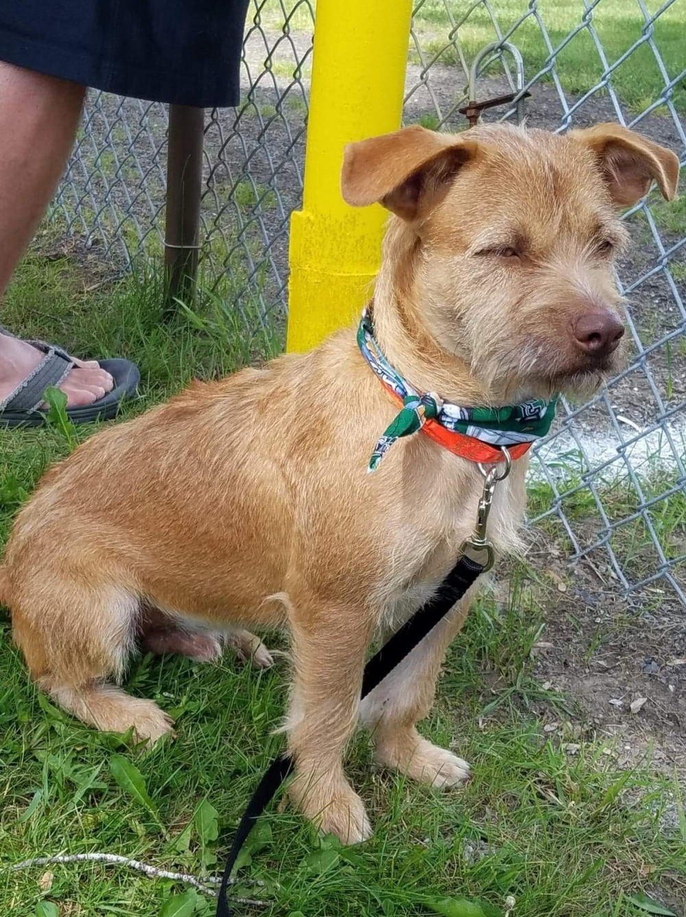 Rusty may have left Puerto Rico for a new life 4fc5390d6