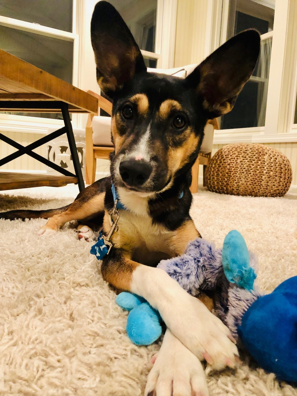 3c5fa16907 It is quite a crowdpleaser in his new home of New Hampshire, where he is  enjoying lots of plush toys, ...