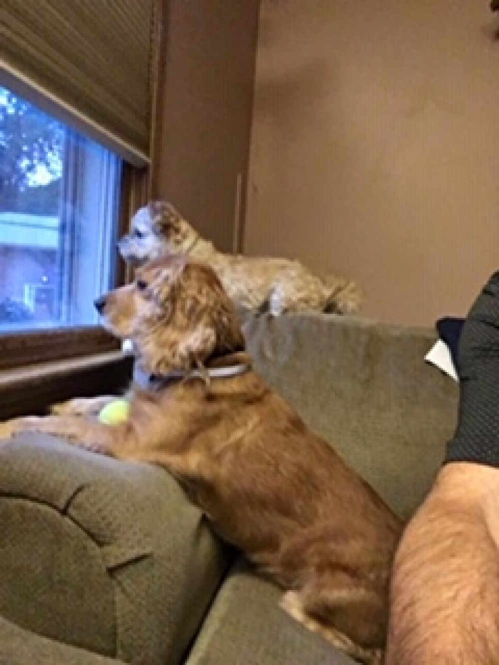 Teddy (in the foreground) was diagnosed with a serious heart condition not  long after flying up to Mass. Our amazing partner, Buddy Dog Humane Society  in ...
