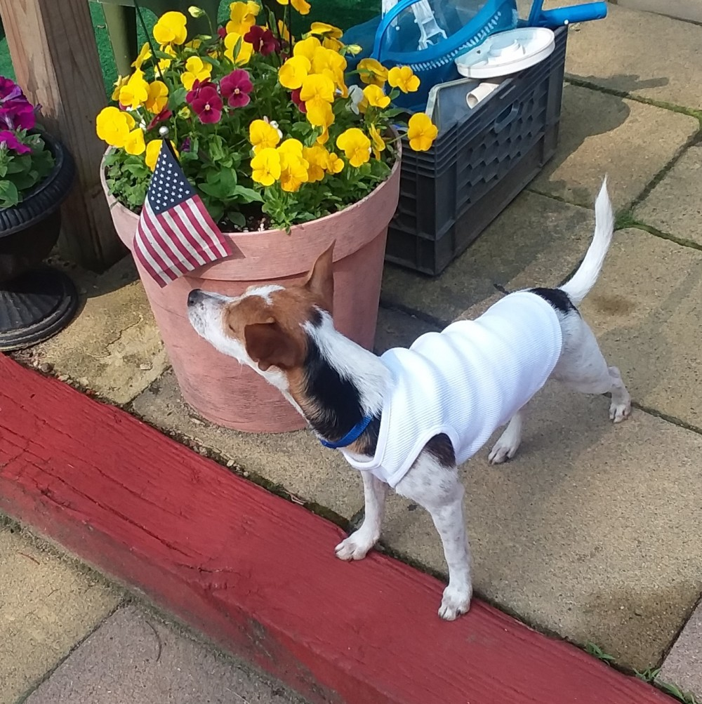 b15a2d7e8f76 Dylan now lives in Massachusetts with his new forever mom and dad. He has a  fenced in yard and, in the good weather, his parents prop open the back  door and ...