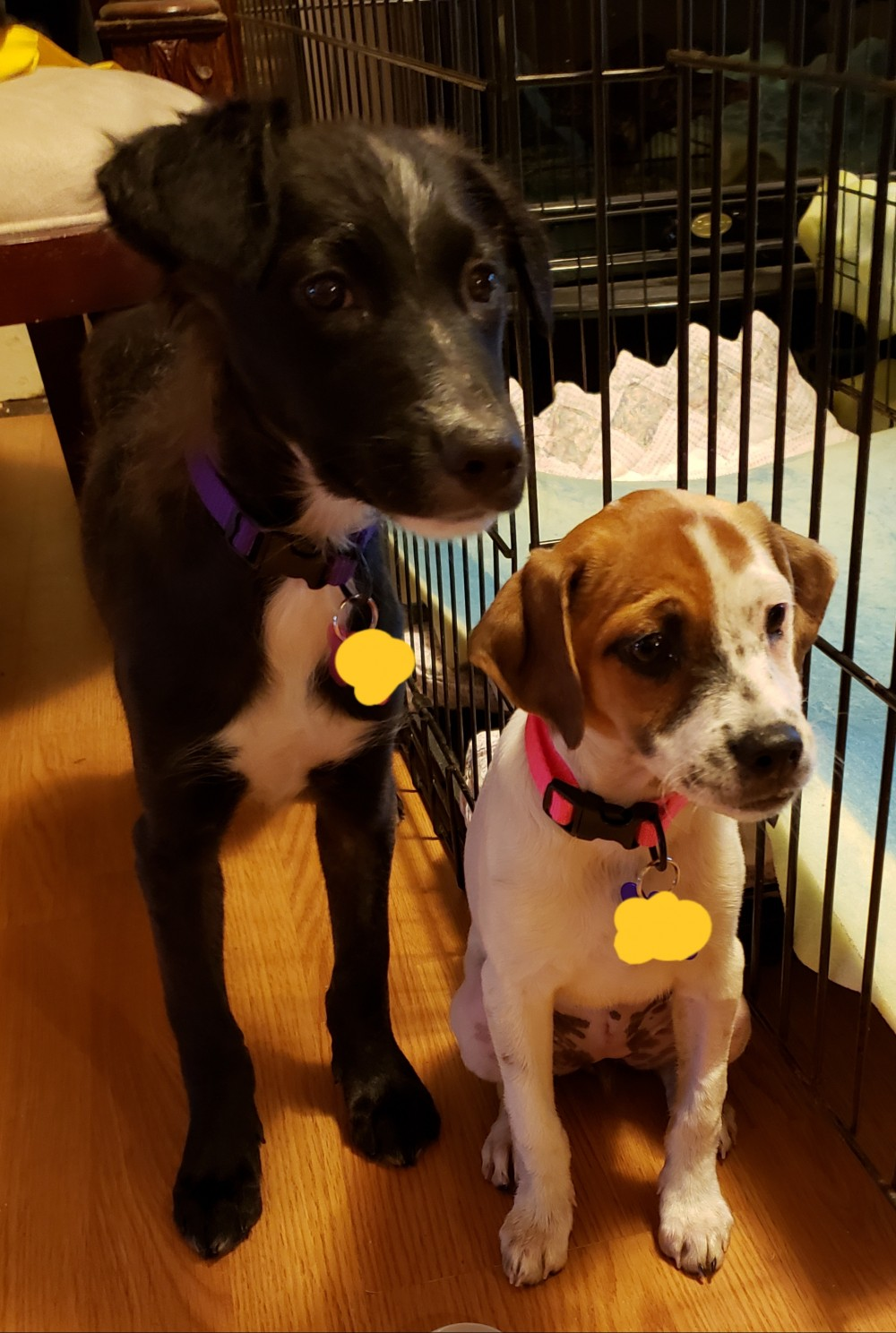 179f3ae84 Holly and Tammy were lucky enough to be adopted together. They found their  wonderful new home through the Sterling Animal Shelter in Sterling