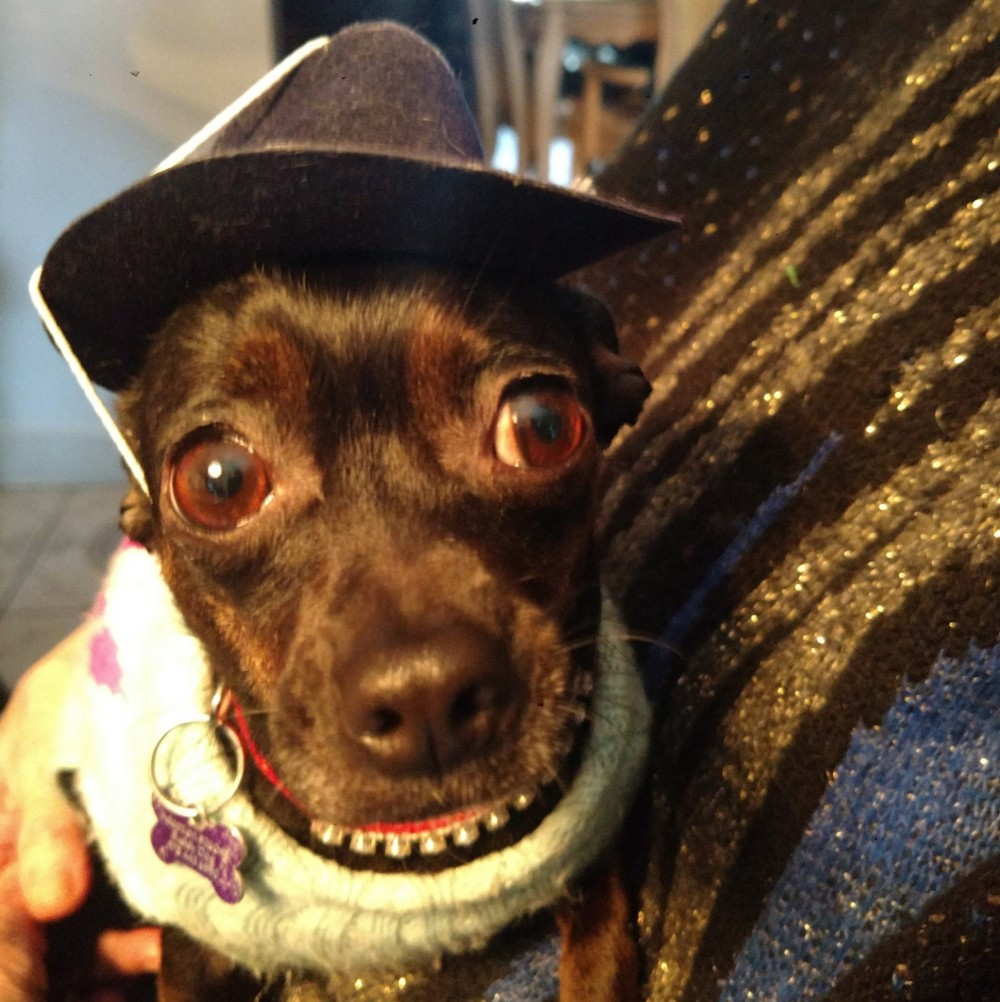 1e6559d146064 Chica found her forever home in Massachusetts about a year ago. She is very  happy. Her favorite thing to do--aside from wearing a sombrero!--is to sit  on ...