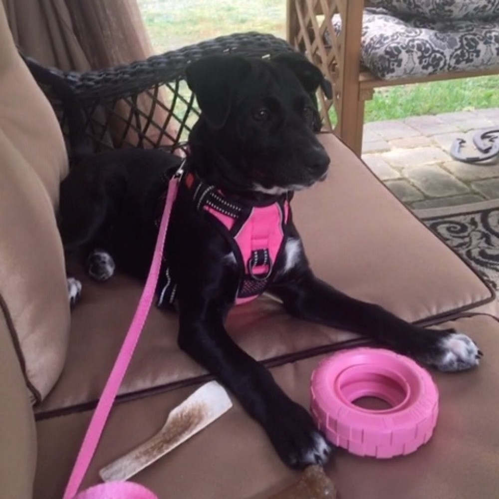 751196c8888c Rosa found a wonderful home through the Monmouth County SPCA in New Jersey.  This lucky girl does not lack for anything...she has plenty of toys,  bandanas, ...
