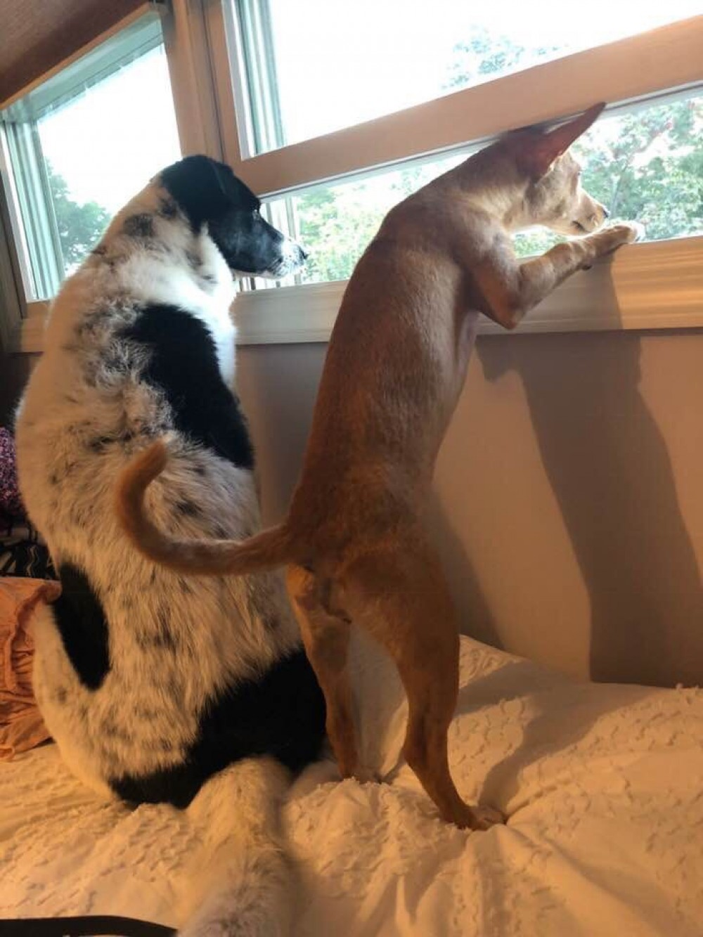 Ramona (on the right) has been enjoying her new life! She likes to spend it  with her big sister, April looking out the window!
